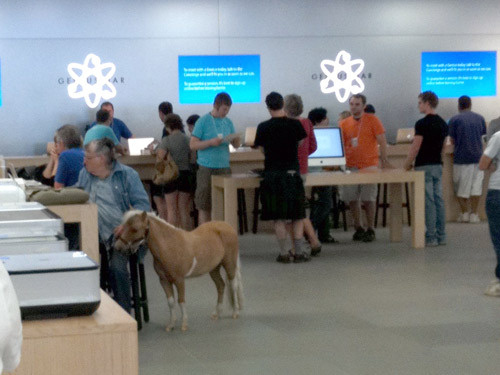 Pony en tienda Apple