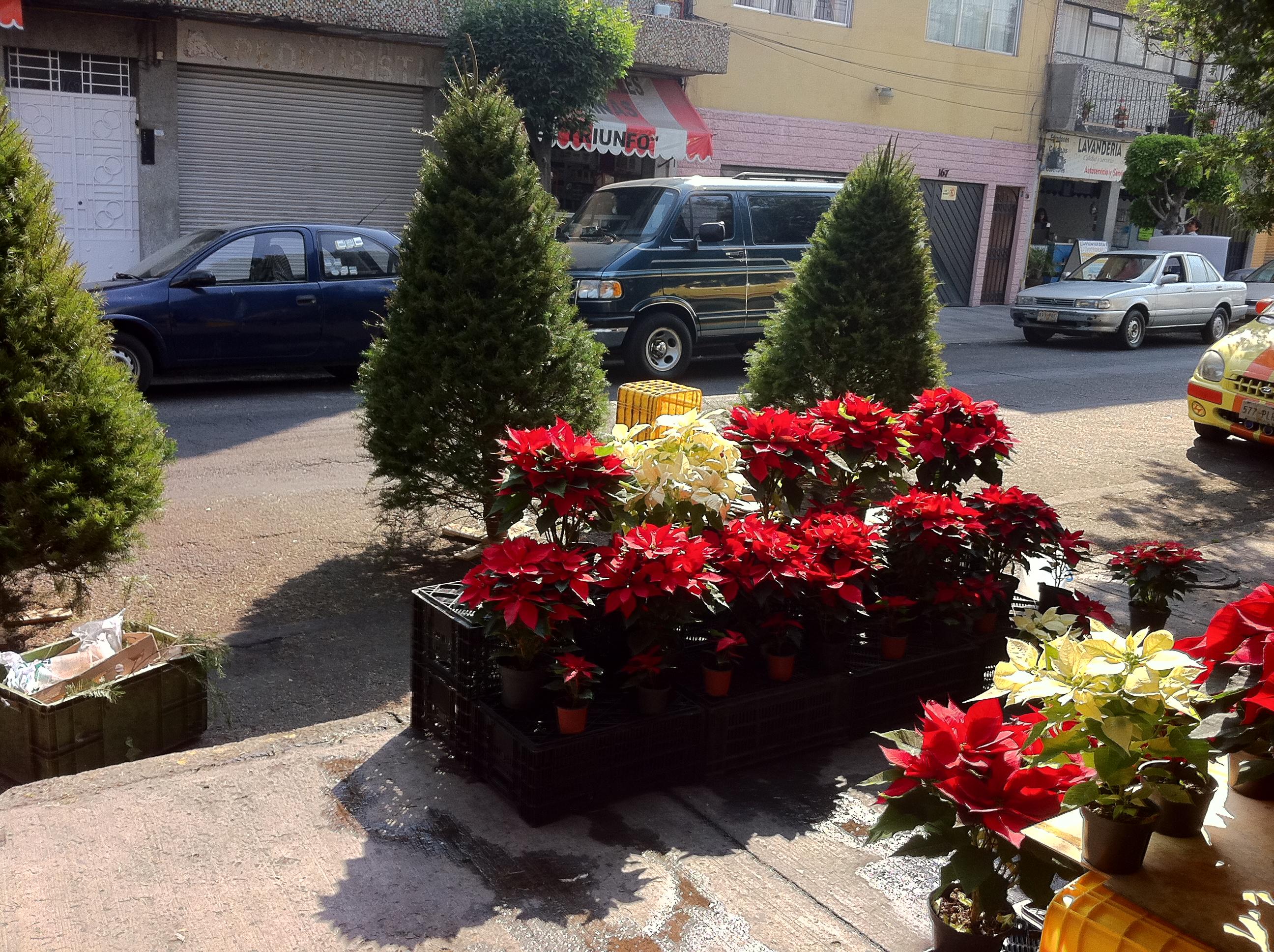 iPhone4_LuzNatural_Original