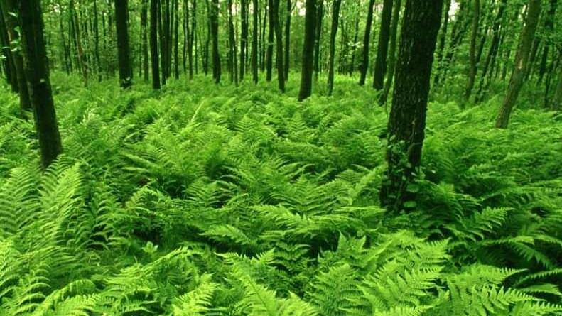 NATURE-GreenForest_1024x768
