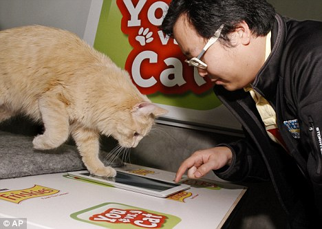 you-vs-cat (1)