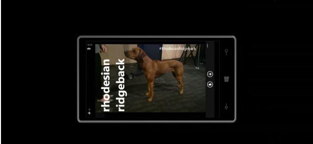 projectadam-cortana-perro