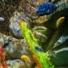 acuario19