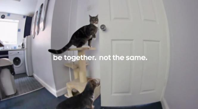 Fragmento del video de la campaña de Android