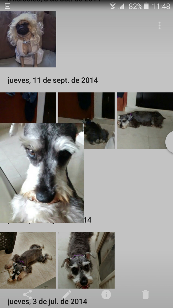 Google photos perros