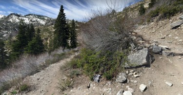 Google views sera parte de street view y mapas