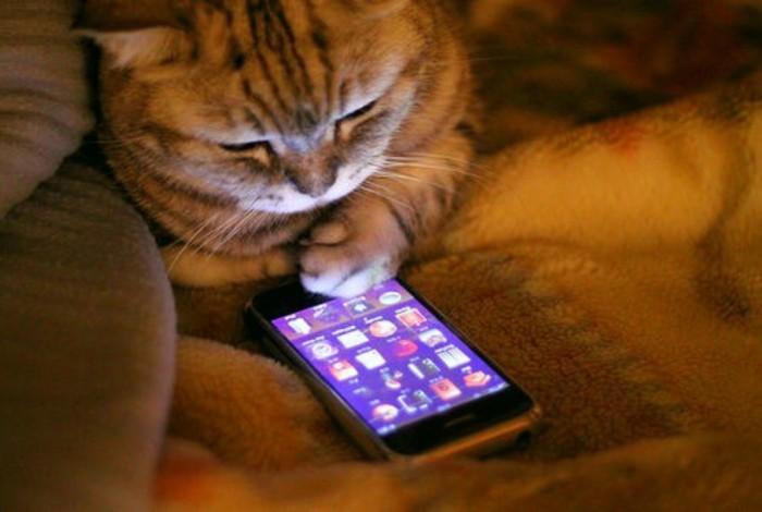 cat-having-a-smartphone
