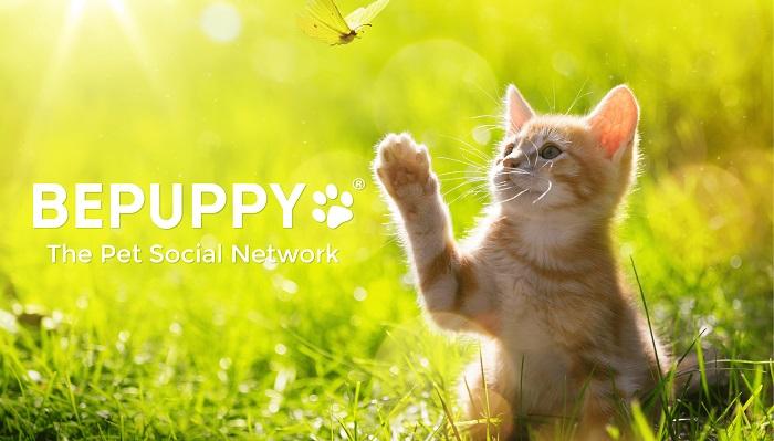 BEPUPPY-gato